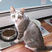 Adopt A Pet :: Melody (Petco Hamilton Square) - Trenton, NJ
