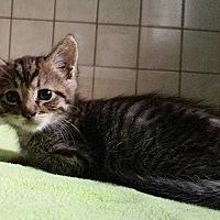 Adopt A Pet :: Thumper - Paradise, CA