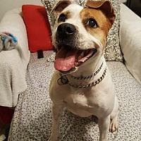 Adopt A Pet :: Fawn - Darien, GA