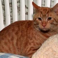 Adopt A Pet :: Bradley - Westville, IN