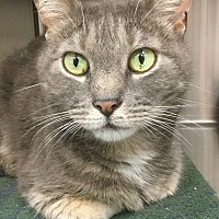 Adopt A Pet :: Creed - Webster, MA