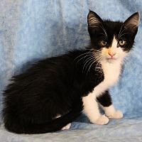 Adopt A Pet :: Ozzy - Greensboro, NC
