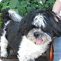 Adopt A Pet :: Rebel - Salem, OR