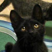 Adopt A Pet :: Lasagna - Hastings, NE