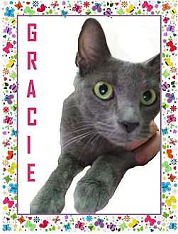 Domestic Shorthair Cat for adoption in Wichita, Kansas - Gracie