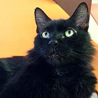Adopt A Pet :: Luke - Sarasota, FL