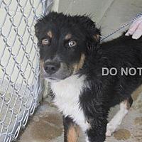 Adopt A Pet :: Fiona - Rocky Mount, NC