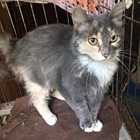 Adopt A Pet :: Blossom - Delmont, PA