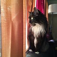 Adopt A Pet :: Lacey - Flushing, NY