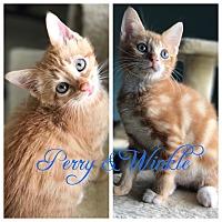 Adopt A Pet :: Perry - Island Park, NY