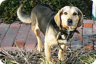 Beagle Mix Dog for adoption in Ridgely, Maryland - Doodles
