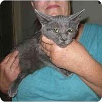 Adopt A Pet :: Mia - Riverside, CA