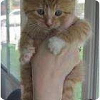 Adopt A Pet :: Jodi - Warren, MI