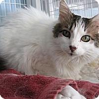 Adopt A Pet :: Alexis - Kingston, WA