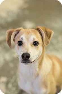 Terrier (Unknown Type, Medium)/Terrier (Unknown Type, Medium) Mix Puppy for adoption in Greensburg, Pennsylvania - Carmelo