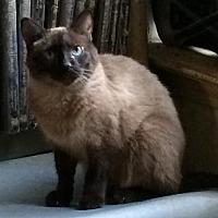Adopt A Pet :: Bonnie 2 - Austin, TX