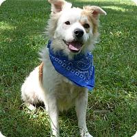 Adopt A Pet :: Lenny - Mocksville, NC