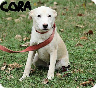 German Shepherd Dog Mix Puppy for adoption in Harrisonburg, Virginia - Cora
