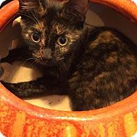 Adopt A Pet :: Claudette 161795 - Atlanta, GA