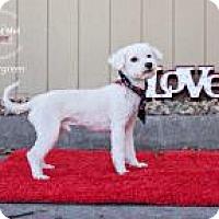 Adopt A Pet :: Spearmint - Shawnee Mission, KS