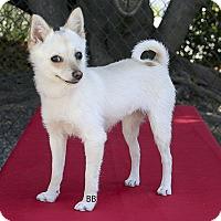 Adopt A Pet :: Crystal - Santa Barbara, CA