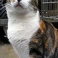 Adopt A Pet :: LM-Marigold - Devon, PA