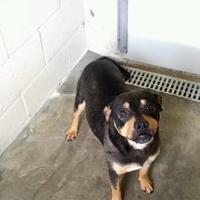 Adopt A Pet :: Tonya - Tiger, GA