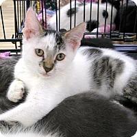 Adopt A Pet :: Gracie - Castro Valley, CA
