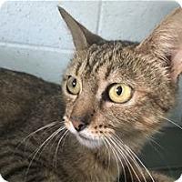 Adopt A Pet :: Ms. Jackson - Kailua-Kona, HI