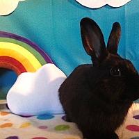 Adopt A Pet :: Bot - Trenton, NC