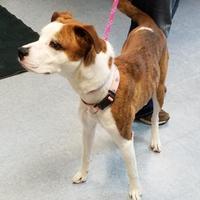 Adopt A Pet :: Gabbi - Buffalo, WY