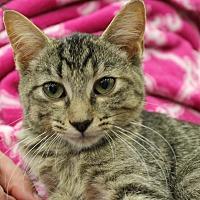 Adopt A Pet :: Demi - Wichita Falls, TX