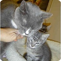 Adopt A Pet :: Momma Kitty - Modesto, CA