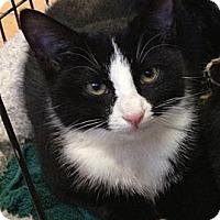 Adopt A Pet :: Charlie - Denton, TX