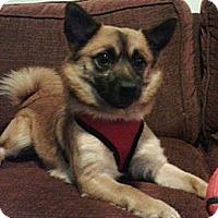 Adopt A Pet :: Charlie - Mt Gretna, PA