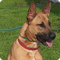 Adopt A Pet :: BROOKE - Tully, NY