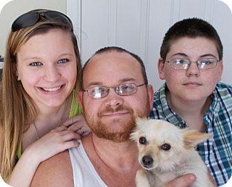 Chihuahua Dog for adoption in Plain City, Ohio - Lola
