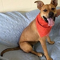 Boxer/Shepherd (Unknown Type) Mix Dog for adoption in Jasper, Tennessee - Angelina