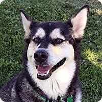 Adopt A Pet :: JASMINE - Adoption Pending - Boise, ID