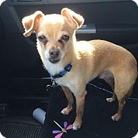 Adopt A Pet :: Mr. T - Duchess, AB