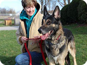 German Shepherd Dog Mix Dog for adoption in Elyria, Ohio - Riot
