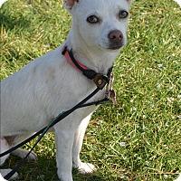 Adopt A Pet :: Lady Bug - Meridian, ID
