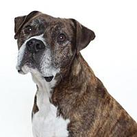 Adopt A Pet :: ROCCO - Burbank, CA