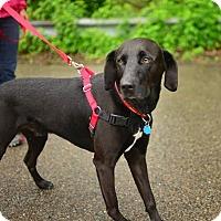 Adopt A Pet :: Murphy - Beacon, NY