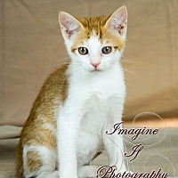 Adopt A Pet :: Apoc - Crescent, OK