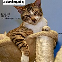 Adopt A Pet :: Devon - Marlboro, NJ