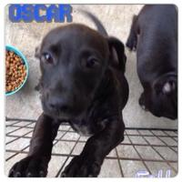Adopt A Pet :: Oscar - Beaumont, TX