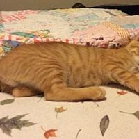 Adopt A Pet :: Tigglet - Smithfield, NC