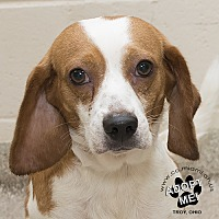 Adopt A Pet :: Marvin - Troy, OH