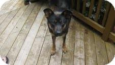 German Shepherd Dog Mix Dog for adoption in Okotoks, Alberta - Maggie Mae